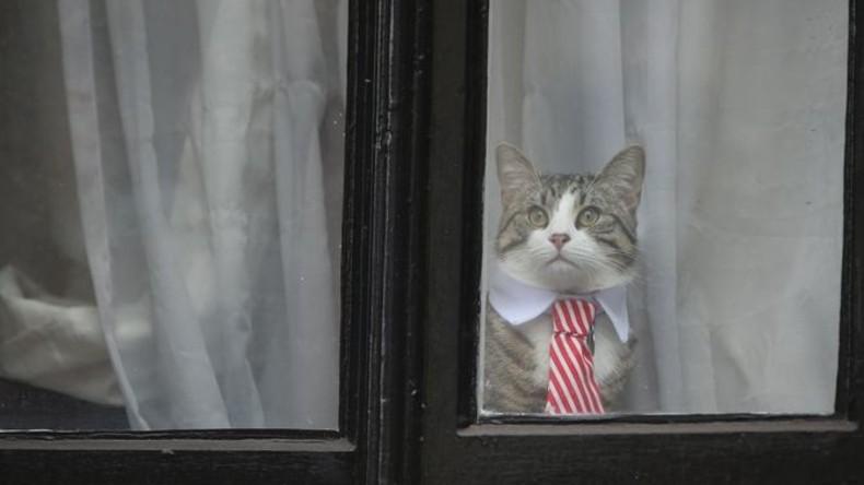 Assanges Kater macht sich zum Verhör seines Besitzers schick