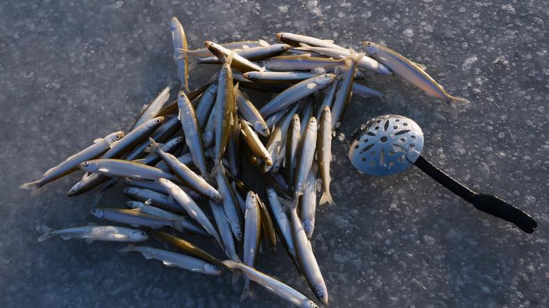 Petri Heil: In Wladiwostok hat die Eisfischsaison begonnen