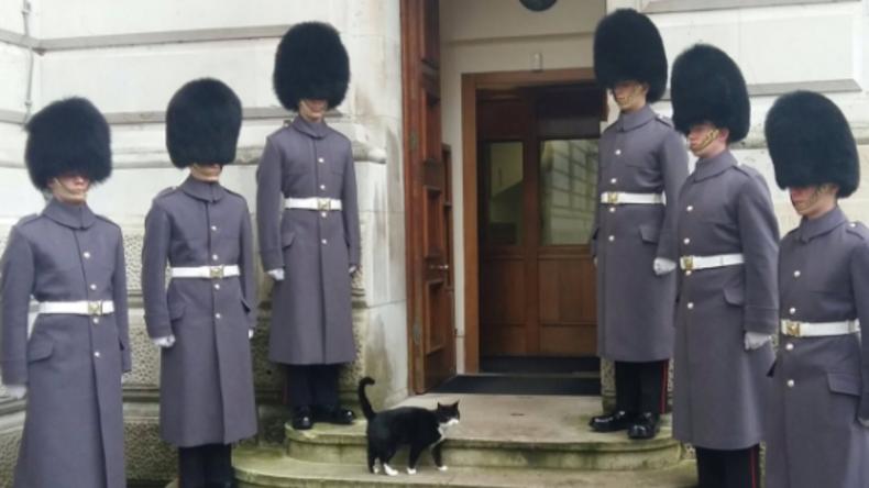 Kater aus britischem Außenministerium hat eigene Ehrenwache