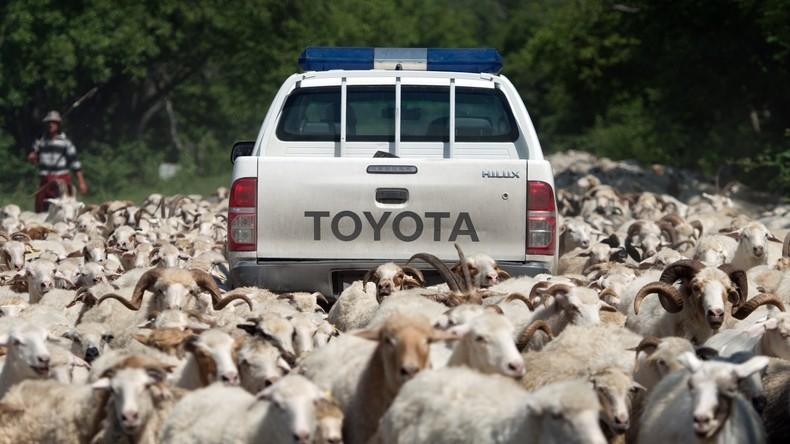 Türkische Gendarmerie verwechselt Schafdiebe mit Terroristen