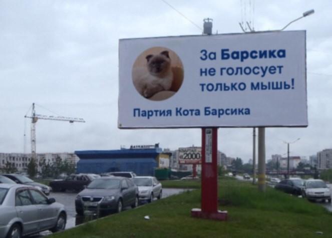 Kater will neuer russischer Präsident werden