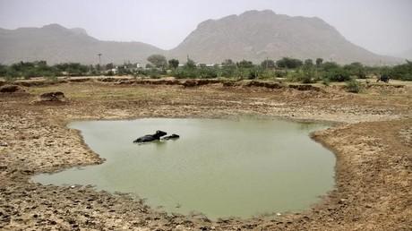 Laut Meteorologen wird das Jahr 2016 das heißeste Jahr auf der Erde. Ein Büffel badet in einer ausgetrockneten Pfütze, Ajmer, Indien, Mai 2015.