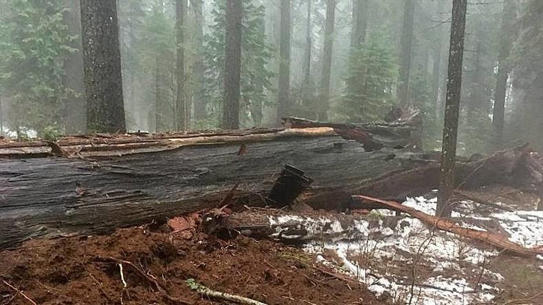 Sturm reißt Tunnelbaum in Kalifornien um