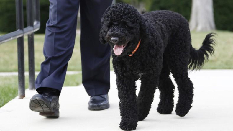 Obamas Hund beißt 18-Jährige im Weißen Haus
