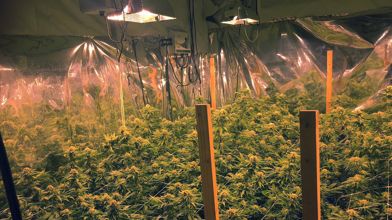Bundestag gibt Cannabis auf Rezept frei