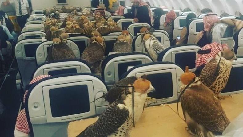 Saudischer Prinz bucht Flugtickets für 80 Falken [VIDEO]