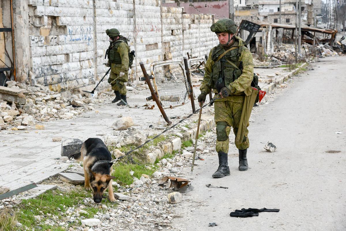 Minensuchhunde spielen die wichtigste Rolle bei der Suche von Strengstoff, Bomben sowie selbstgebastelten Sprengsätzen, die kein Metall enthalten, was das Finden solcher Objekte mithilfe von Detektoren deutlich erschwert
