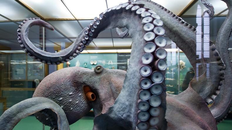 US-Wissenschaftler: Kraken sind Außerirdische