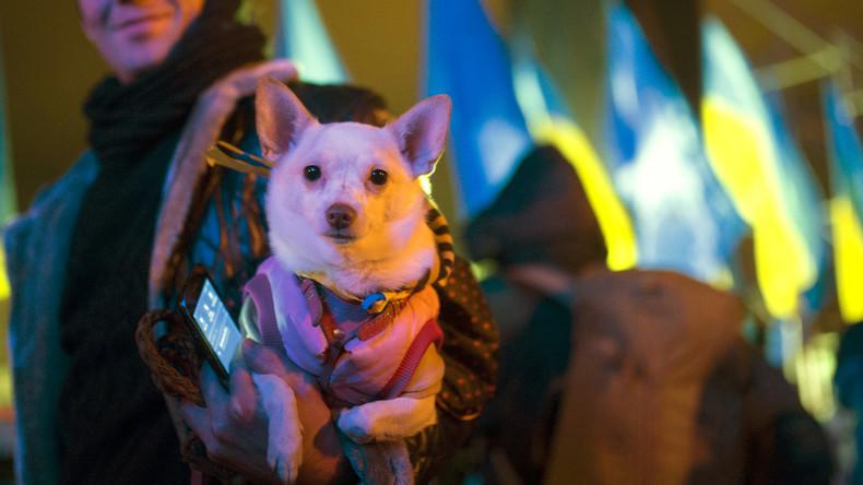 """Kiew soll zum Eurovision Song Contest von Straßenhunden """"gesäubert"""" werden"""