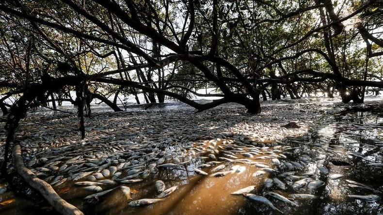 Costa Rica: Tausende Fische verenden im Golf von Nicoya