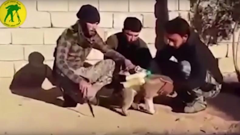 IS-Terroristen ziehen Welpen Sprengstoffgürtel an