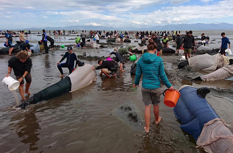 400 Delfine an der Küste von Neuseeland gestrandet