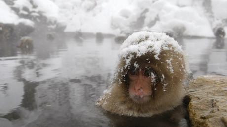 Ein japanischer Schneeaffe badet in einer heißen Quelle in der Stadt Yamanouchi; 17. Februar 2008.