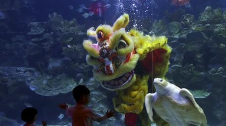 Traditioneller chinesischer Löwentanz unter Wasser zum Beginn des Chinesischen Neujahrs, Kuala Lumpur, 27. Januar 2017.