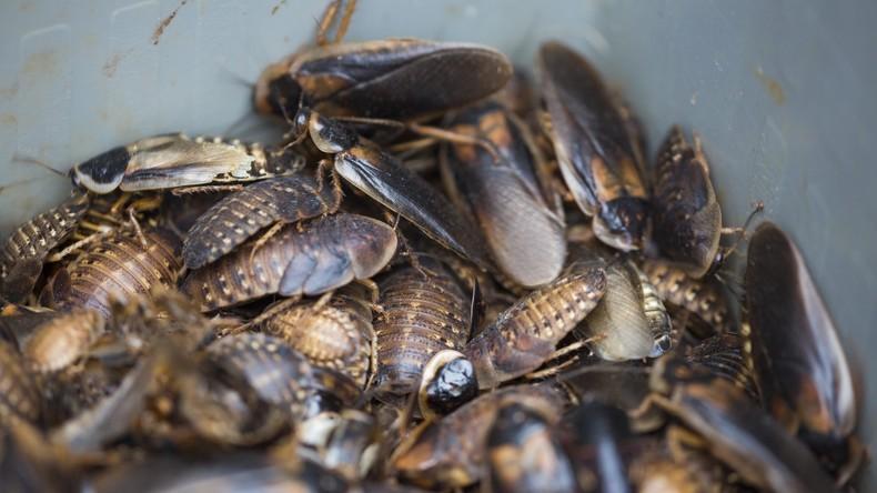 Österreicher bringt Glas voller Kakerlaken ins Gericht