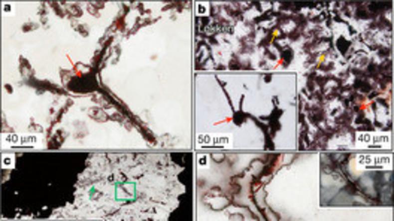 Älteste Organismen auf der Erde entdeckt