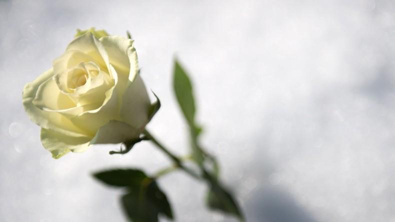 Rosen: Die Akkus der Zukunft