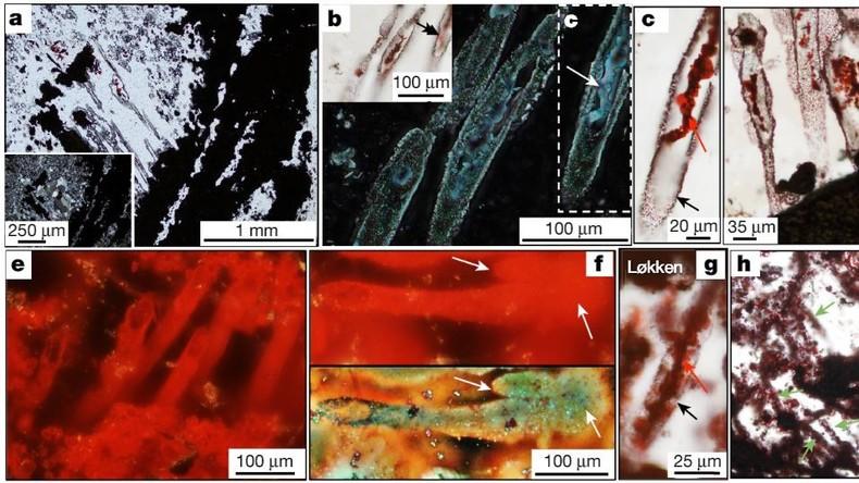 """Forscher entdecken die ältesten Fossilien der Erde: """"Fast vier Milliarden Jahre alt"""""""