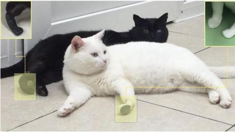 Russische Wissenschaftler entwickeln Titanprothesen für Katzen