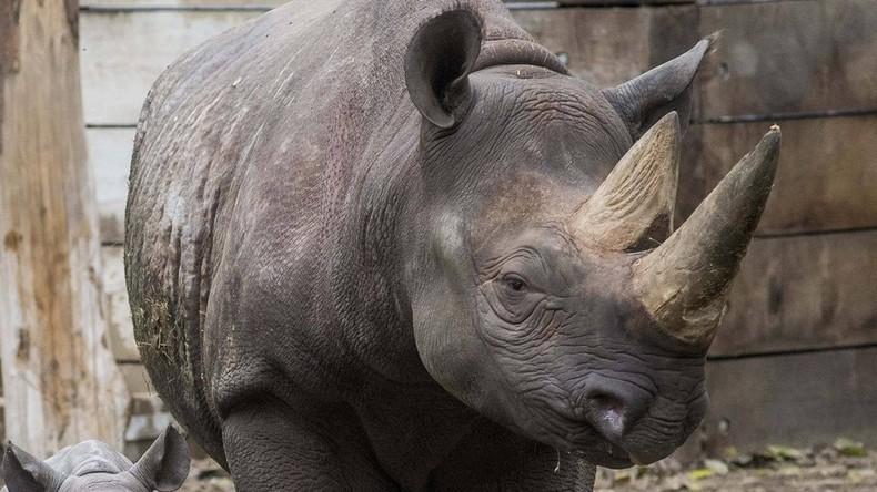 Unbekannte erschießen Nashorn im Zoo bei Paris und sägen sein Horn ab