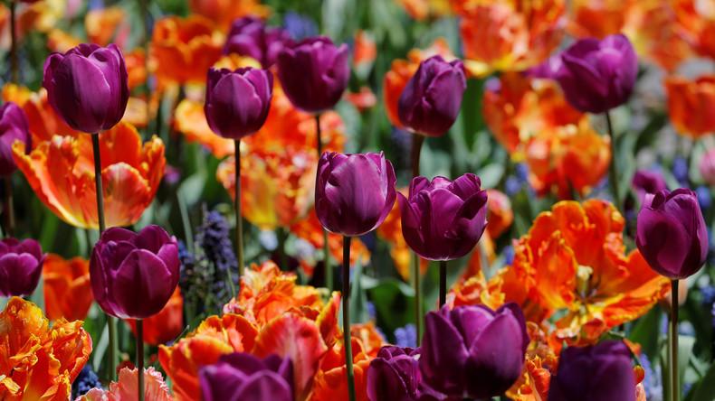 Internationaler Frauentag: Tulpen, Pralinen und Liebe – der 8. März in Russland