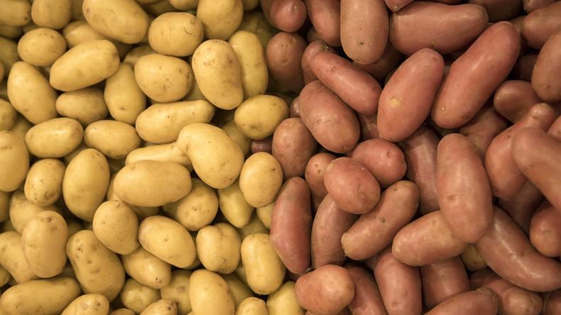 Wissenschaftler beweisen Möglichkeit, Kartoffeln auf Mars zu pflanzen