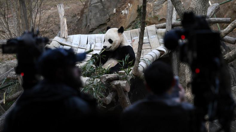 Pornhub setzt sich für Pandabären ein - Nutzer sollen inspirierende Videos für die Tiere drehen
