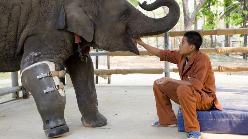 Weltweit erstem Krankenhaus für Elefanten droht Schließung