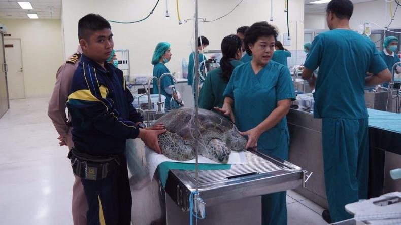 """Trotz Operation: """"Sparschwein""""-Schildkröte mit fünf Kilo Münzen im Magen an Blutvergiftung gestorben"""