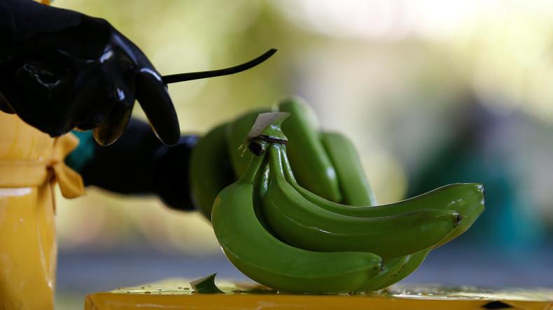 Spaniens Polizei entdeckt 17 Kilo Kokain in künstlichen Bananen