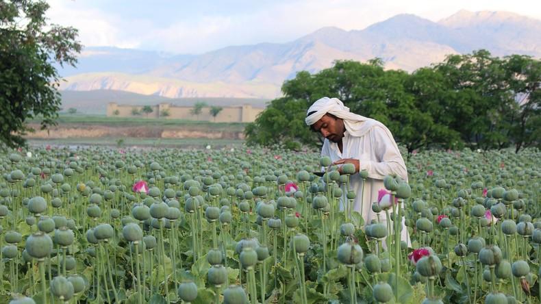 US-Botschaft in Afghanistan kündigt sechs Mitarbeitern wegen Drogenkonsums und Dealens