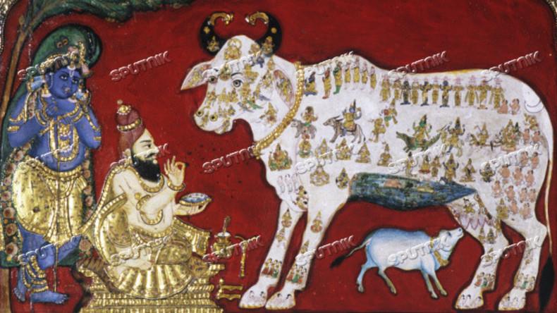 Indischer Bundesstaat führt lebenslange Haft für Mord an Kühen ein