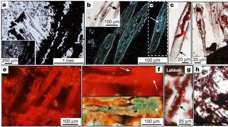 Die fossilen Funde datieren auf rund 4 Milliarden Jahre