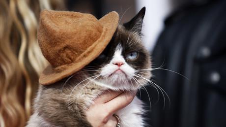 Grumpy Cat avancierte durch ihren mürrischen Gesichtsausdruck zum Star in den sozialen Medien. MTV Music Awards, Kalifornien, USA, 13. April 2014.