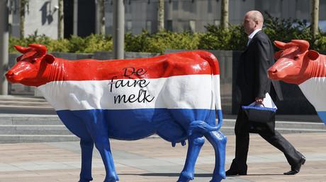 Eine Kuh in den Farben der niederländischen Nationalflagge mit der Aufschrift: Faire Milch vor dem EU-Parlament; während einer Milchbauern-Demonstration in Brüssel; Belgien, 4. Mai 2011.