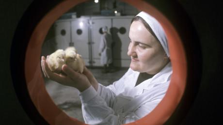 EU stellt Geflügelimport aus Ukraine wegen Vogelgrippe ein