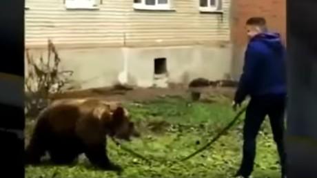 Mann bummelt mit Bären in russischer Stadt – Polizei auf der Suche