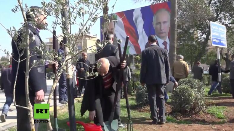 Als Zeichen für Frieden und Freundschaft: Russen und Syrer pflanzen Tausende Olivenbäume in Aleppo