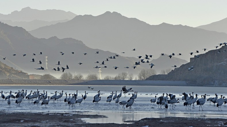 Chinesische Behörden registrieren erste Ansteckung mit Vogelgrippe in Tibet