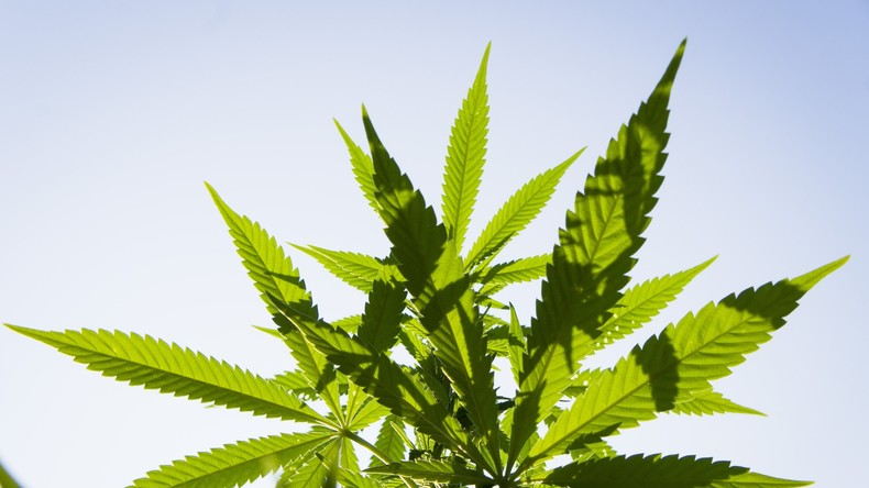 Kanada initiiert landesweite Legalisierung von Cannabis