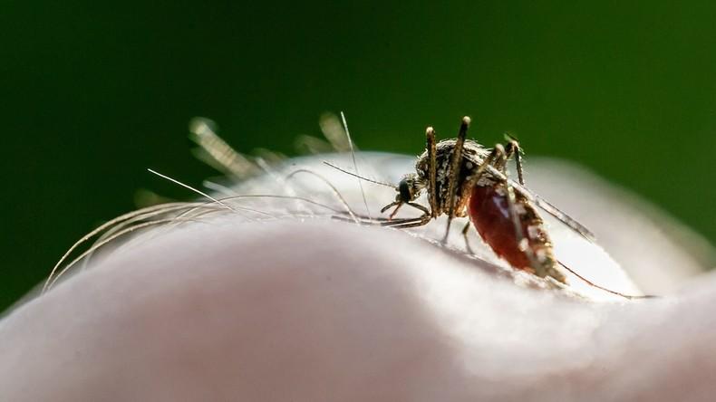 Weltgesundheitsorganisation: über 400.000 Malaria-Tote pro Jahr