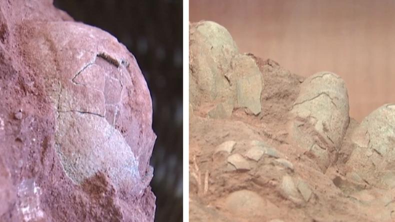 Dinosaurier-Eier in China entdeckt.