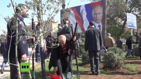 Bürger sowie russische und syrische Soldaten pflanzen Tausende Olivenbäume in Aleppo.