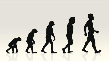 Spricht die Evolution nur Englisch?