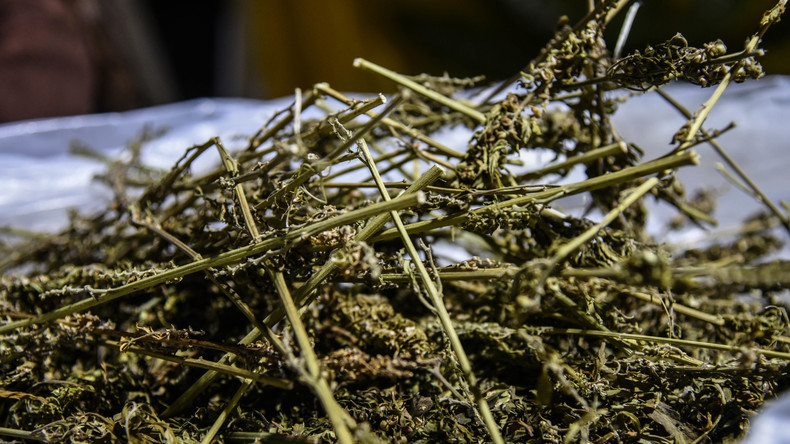 Mehr als 200 Kilogramm Cannabis nahe griechisch-albanischer Grenze sichergestellt