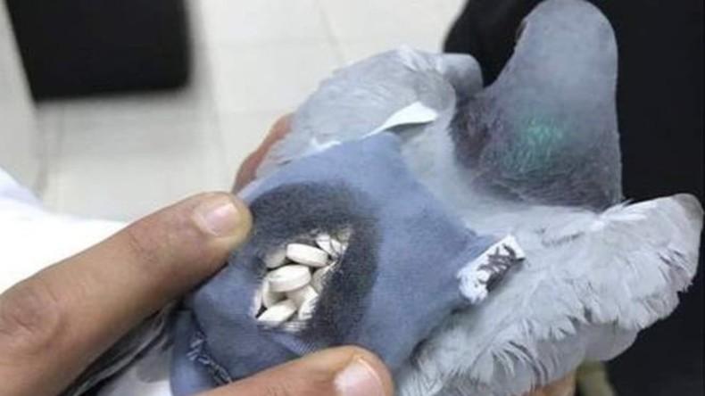 Taube mit fast 180 Partypillen im Rucksack – Kuweit nimmt Drogenkurier fest (FOTOS)