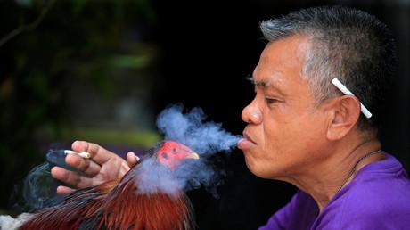 Ein Mann in Paranaque City auf den Philippinen bläst seinem Kampfhahn Zigarettenrauch ins Gesicht, um ihn für den Kampf aggressiv zu machen.