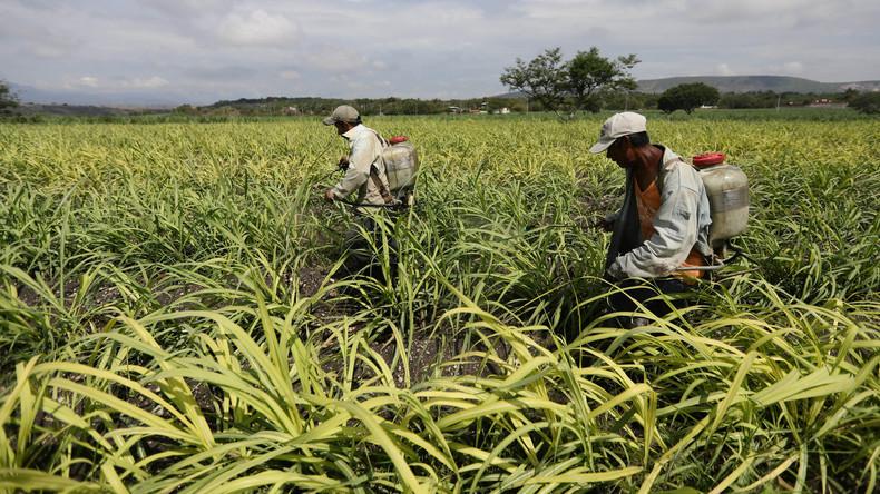 USA und Mexiko einigen sich im Zuckerstreit