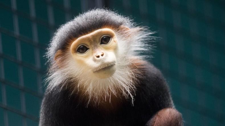 Vietnamesische Polizei nimmt Tierhändler mit gefrorenen Affen fest