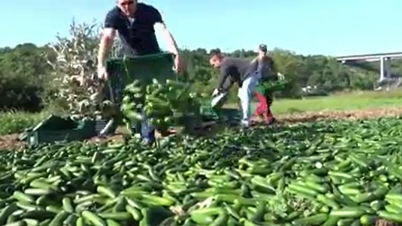 """Viral: Landwirt vs. Handelsketten - """"Wegen fehlender Plastikfolie muss Bauer Ernte vernichten"""""""